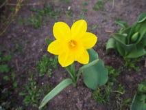La fleur jaune est le jardin photo stock
