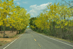 La fleur jaune le long de la route Image libre de droits