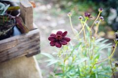 La fleur noire photographie stock