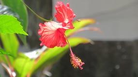 La fleur rencontre la guêpe Photographie stock libre de droits