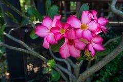 La fleur rose Photos libres de droits