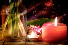 La fleur rose des sessilis roses de Siam Tulip ou de safran des Indes fleurissent dans le vas Photos libres de droits