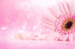 La fleur rose douce de Gerbera avec la gouttelette d'eau, romantique et Photo stock