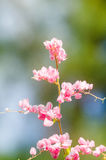 La fleur rose et le fond vert est beau et a l'insecte dedans Image libre de droits