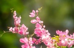 La fleur rose et le fond vert est beau et a l'insecte dedans Photo stock