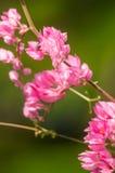 La fleur rose et le fond vert est beau et a l'insecte dedans Photo libre de droits