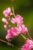 La fleur rose et le fond vert est beau et a l'insecte dedans Image stock
