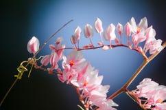La fleur rose et le fond vert est beau et a l'insecte dedans Photos libres de droits
