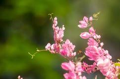 La fleur rose et le fond vert est beau et a l'insecte dedans Images libres de droits