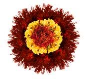 La fleur rouge et jaune font à partir des pétales secs Image libre de droits