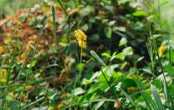 La fleur sèche Photographie stock