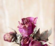 La fleur sèche s'est levée photo stock