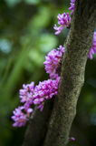 La fleur s'accrochent à l'arbre Image stock