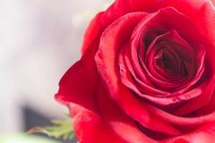 la fleur, s'est levée Image libre de droits
