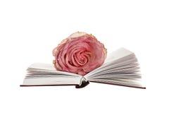 La fleur s'est levée sur le livre ouvert Photos stock