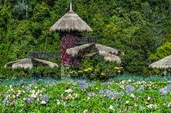 La fleur sur Chiang Mai Photo libre de droits
