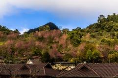 La fleur sur Chiang Mai Photographie stock libre de droits