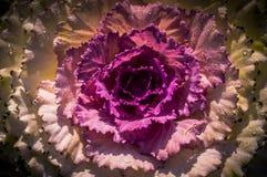 La fleur sur Chiang Mai Image stock