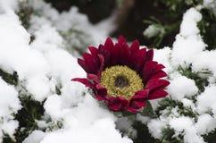 La fleur sur la neige a couvert des branches Image libre de droits