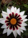 La flor imágenes de archivo libres de regalías
