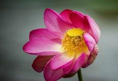 La flor Imagen de archivo libre de regalías