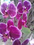 La flor Fotos de archivo libres de regalías