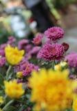 La flor Imagen de archivo