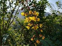 La flor amarilla imagen de archivo libre de regalías