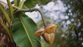La flor amarilla inusual de la palma cuelga abajo en un tronco escamoso almacen de video
