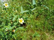 La flor amarilla minúscula encendido fuera del verde del foco sale del fondo borroso imagenes de archivo