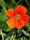La flor anaranjada para arriba cierra 4k Imagen de archivo libre de regalías