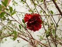 La flor artificial foto de archivo