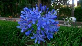 La flor azul Imagenes de archivo
