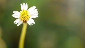 La flor blanca Foto de archivo