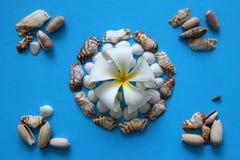 La flor blanca con las conchas marinas en el fondo azul Foto de archivo