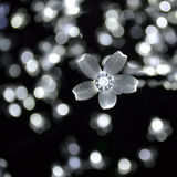 La flor blanca enciende Bokeh Imagenes de archivo