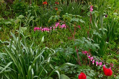 La flor brillante hermosa de la primavera Imágenes de archivo libres de regalías