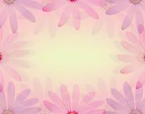La flor colorida de la margarita en estilo dulce suave del color y de la falta de definición texturiza el fondo Imágenes de archivo libres de regalías