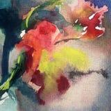 La flor colorida del fondo del arte de la acuarela subió Foto de archivo libre de regalías
