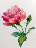 La flor colorida del fondo del arte de la acuarela subió Imagenes de archivo
