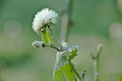 La flor con las hojas verdes se cubre con escarcha foto de archivo libre de regalías