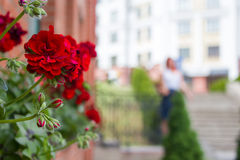 La flor, consolida, subió, naturaleza Imagen de archivo libre de regalías