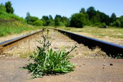 La flor crece entre las pistas de ferrocarril Foto de archivo