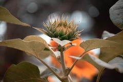 La flor creciente imagen de archivo