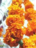 La flor de Hd imagenes de archivo