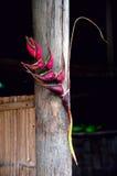 La flor de Heliconia adornó la choza de bambú Fotografía de archivo
