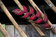 La flor de Heliconia adornó la choza de bambú Foto de archivo libre de regalías