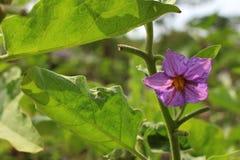 La flor de la calabaza Fotos de archivo