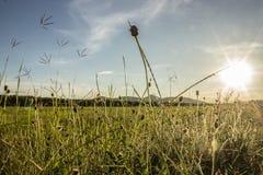 La flor de la hierba Imagen de archivo libre de regalías