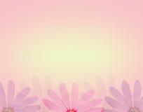 La flor de la margarita en estilo dulce suave del color y de la falta de definición texturiza el fondo Fotografía de archivo